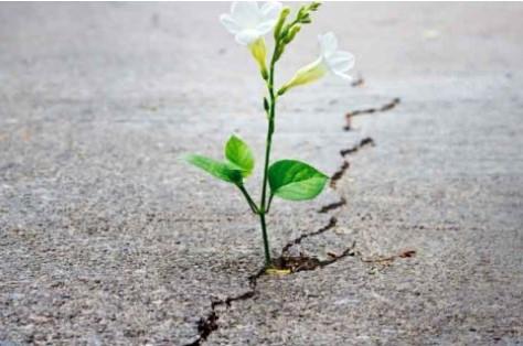 flower sidewalk